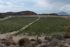 Milos Vineyard, an innovative reclamation project of IMERYS
